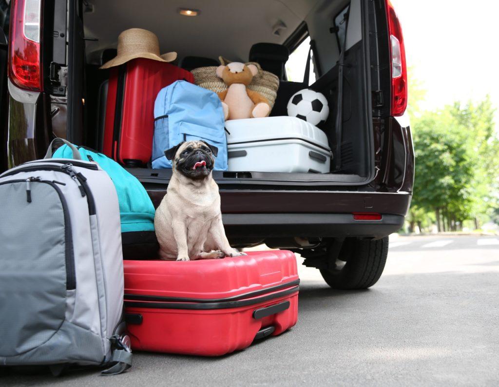 Как подготовиться к путешествию летом на автомобиле?
